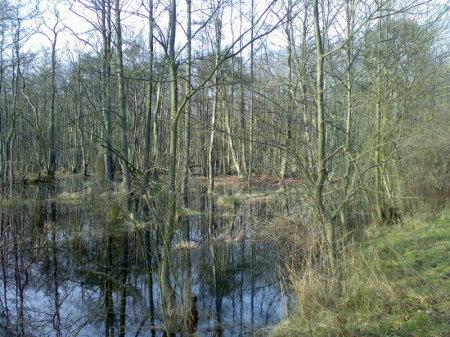 Darsser Urwald, Nationalpark Vorpommersche Boddenlandschaft
